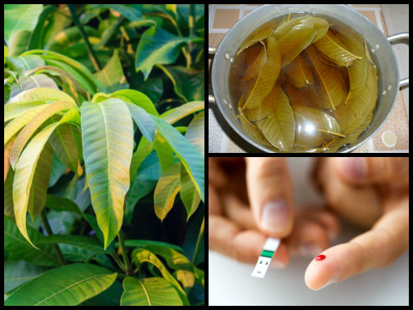 Mango Leaf Tea Fights Type 2 Diabetes and Reduces Belly Fat