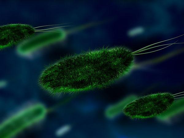 बैक्टीरियल संक्रमण का खतरा
