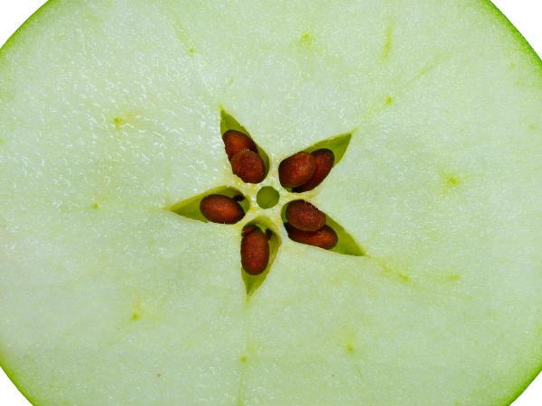 सेब खाने से पहले इसके बीज निकाल दें, वर्ना हो सकती है मौत!