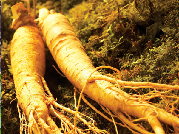 5 Health Benefits Of Ginseng For Men