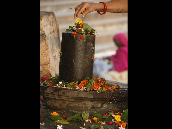 flowers offered to lord shiva