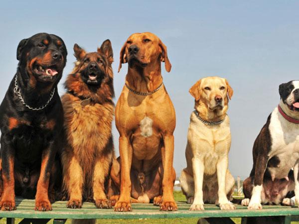 क्या आपकी गाड़ी की पीछे कभी कुत्ते भागे है, जानिए क्यो कुत्ते ऐसा करते है