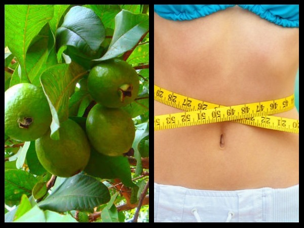 Guavas for Weight Loss: How Do Guavas Help you Shed Kilos