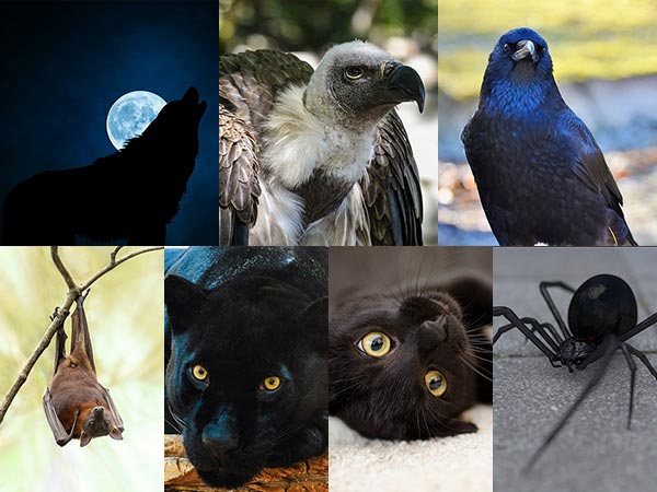 चुनिये अपना मन पसंद जानवर और जानिये अपनी बुराइयों को
