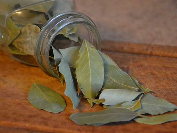bay leaves benefits