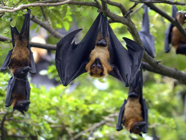 Heres How You Can Protect Yourself From Nipah Virus