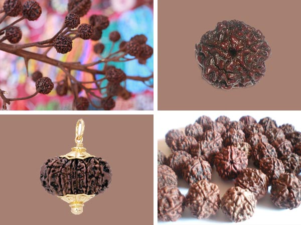 amazing-benefits-rudraksha-beads