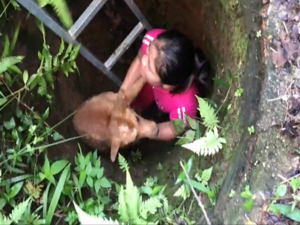 Dog cries when rescued