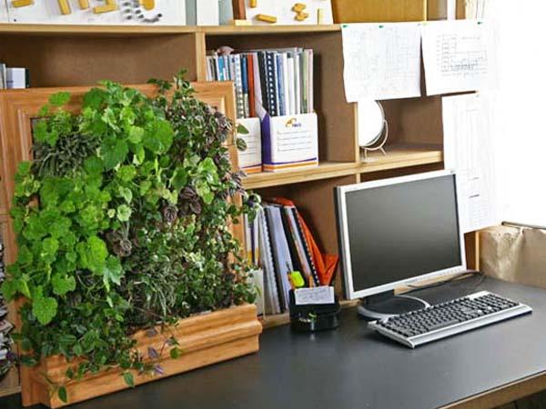 चमकाना चाहते हैं किस्मत तो ऑफिस में रखें ये पौधे