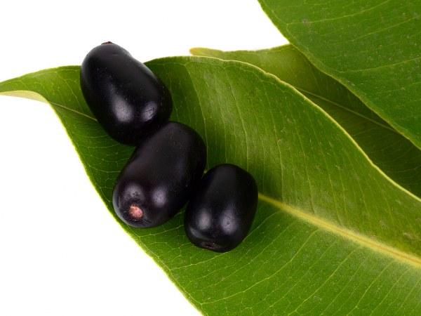 जामुन ही नहीं इसकी पत्तियों में भी छिपे है कई कुदरती फायदे, बीपी और डायबिटीज की है देसी दवा