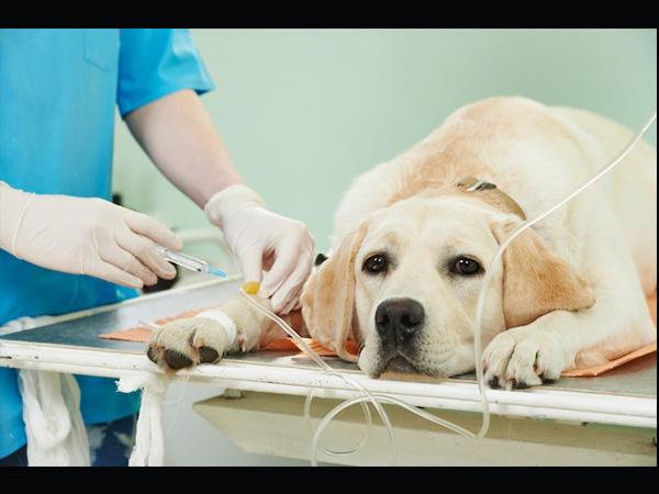 जानें कैसे हो जाती है कुत्तों की किडनी में पथरी, पढ़िए लक्षण और इलाज के बारे में