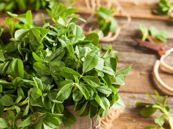 How fenugreek leaves can control dengue