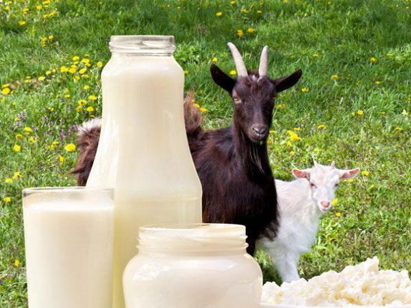 चेहरे की रंगत और बालों को मुलायम करने के लिए लगाएं बकरी का दूध