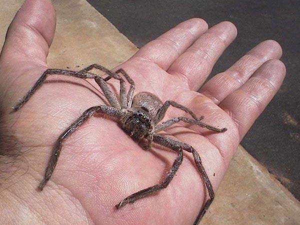 स्पाइडर बाइट से भी हो सकता है खतरनाक संक्रमण, जानें मकड़ी काटने पर क्या करें