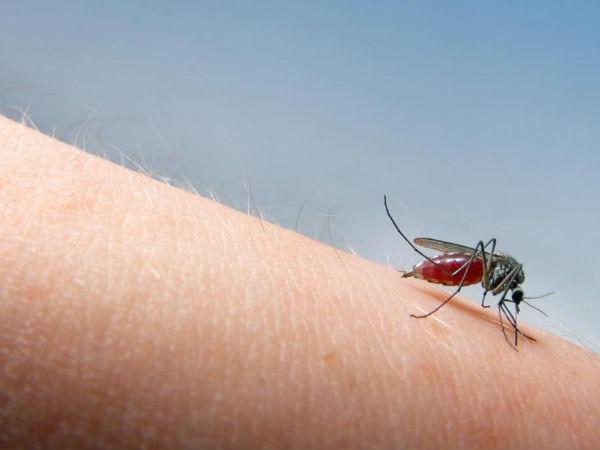 मच्छर काटने के बाद क्यों होती है खुजली?