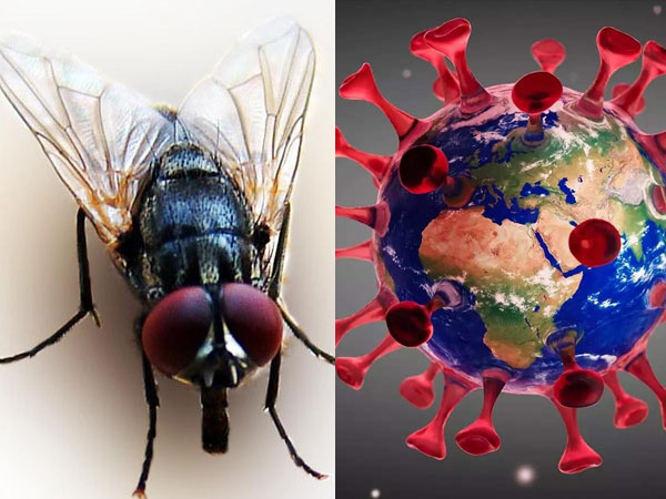 स्टडी: मक्खियां भी फैला सकती हैं कोरोना, जानें कितने दिन तक इंसान के मल में जिंदा रहता है वायरस