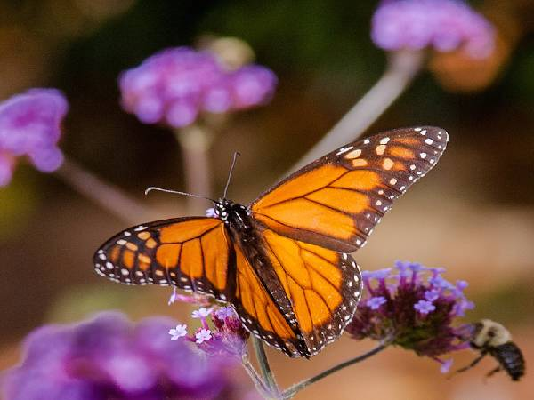 बस करें यह चार काम, छत के गार्डन पर आएंगी खूबसूरत तितलियां
