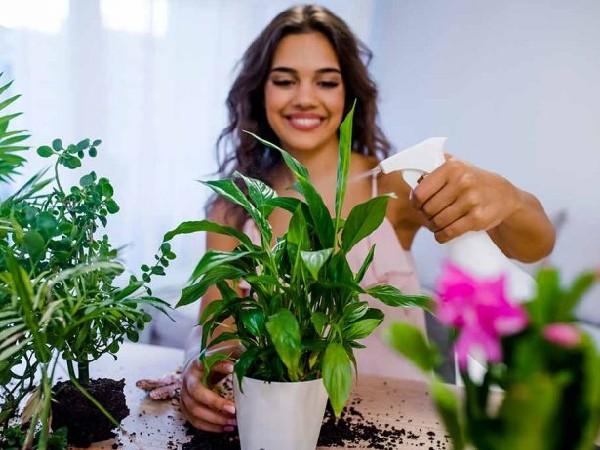 बारिश के मौसम में पौधे नहीं होंगे खराब, अगर इस तरह से करेंगे केयर