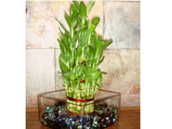 इन छायादार पौधों से आपके घर को मिलेगा एक्स्ट्रा लुक