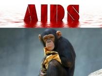 इंसान ने नहीं, बल्कि इस जानवर ने फैलाया है एड्स का रोग