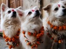 क्या होता है नेपाल का कुकुर तिहार?
