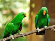 वास्तु के अनुसार क्या होता है तोता पालना