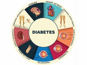 World Health Day 2016 What Organs Does Type 2 Diabetes Affet