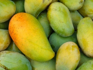Is It Safe Eat Mangoes During Pregnancy