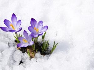 इन फूलों की बागवानी से सर्दियों में गार्डन को बनाएं गुलजार