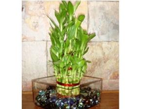 घर की बालकनी और छत पर लगाएं ये छायादार पौधे