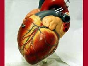 Calcium May Increase Heart Attack Risk
