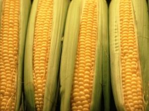 Health Benefits Corn