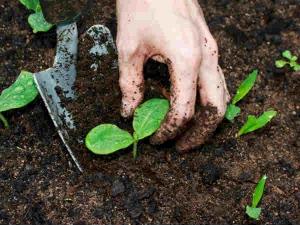 Tips Seeding Lawn