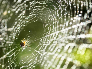 How Get Rid Spider Webs