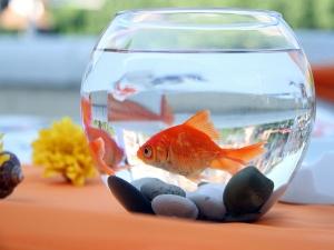 Myths About Keeping An Aquarium