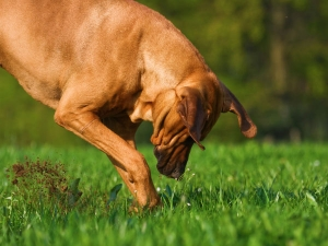How Stop Dogs From Digging
