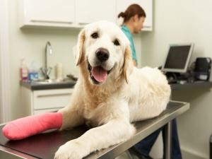Take Care Injured Dog Guide.html