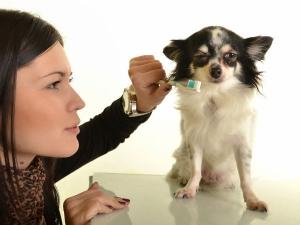 Dental Care Tips Pups.html