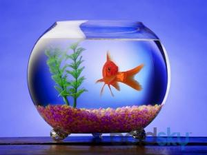 6 Simple Ways Clean Fish Bowl