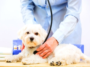 5 Signs Tell If Dog Is Sick