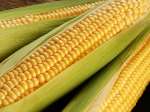 Myths About Corn You Should Stop Believing