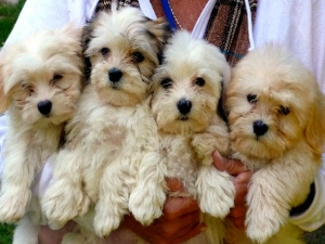 Five Best Dogs Students