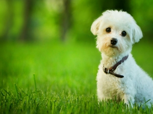 Ways Prevent Pet Allergies At Home