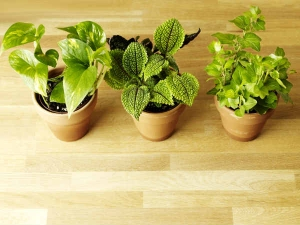 Houseplants That Will Purify Your Home