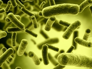 Amazing Facts About Bacteria