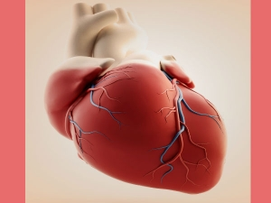 World Heart Day 7 Habits That Are Harmful Your Heart