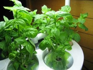 Herbs Grow Pots