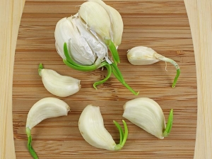 Amazing Health Benefits Sprouted Garlic