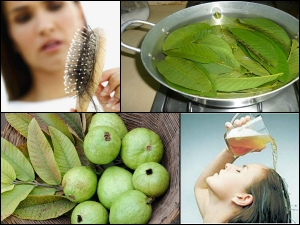 3 Steps Stop Hair Fall Using Guava Leaves