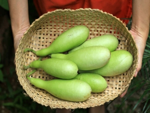 Reasons Why You Should Eat Bottle Gourd Lauki During Summer